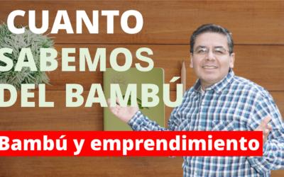 Bambú y emprendimiento sostenible