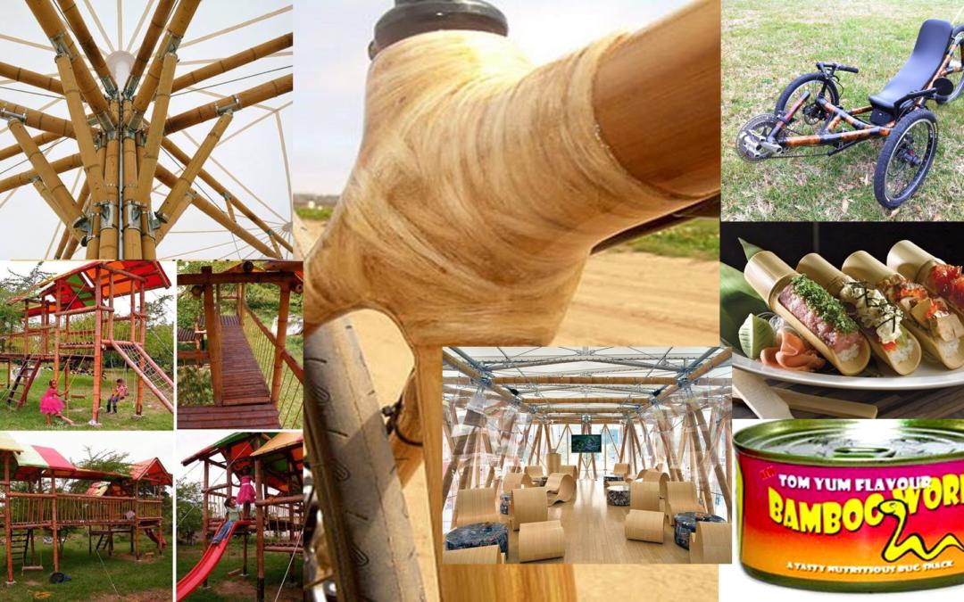 Sostenibilidad integral del Bambú