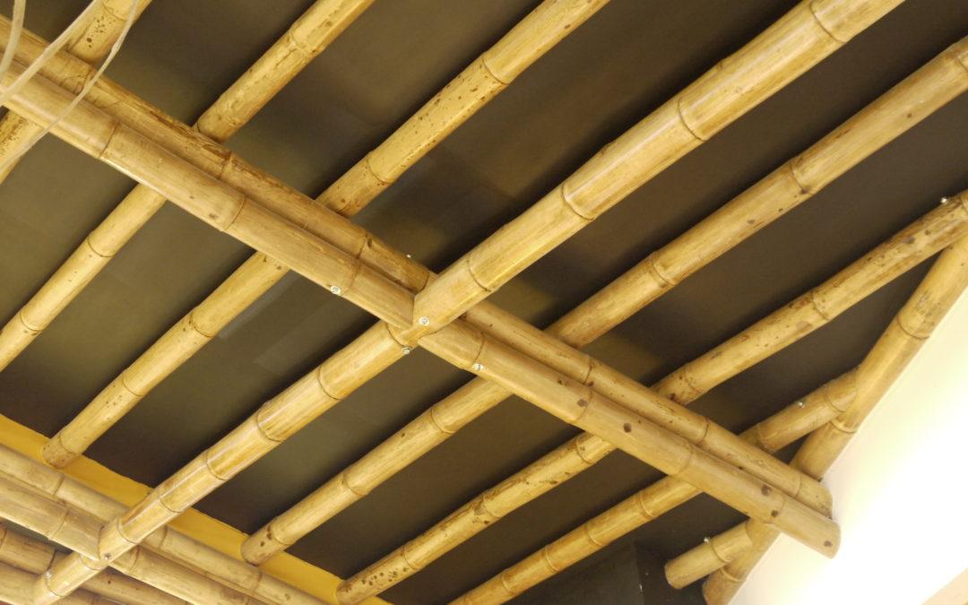 Bambú: Disponibilidad y diseño de la estructura