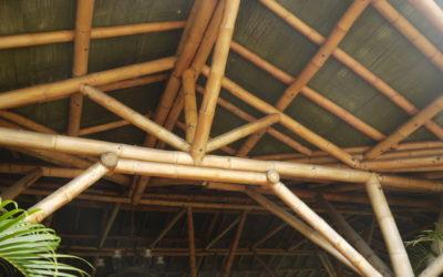 Bambú: el proyecto y su materialización