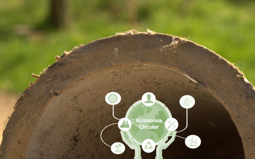 Economía circular y su mejor aliado