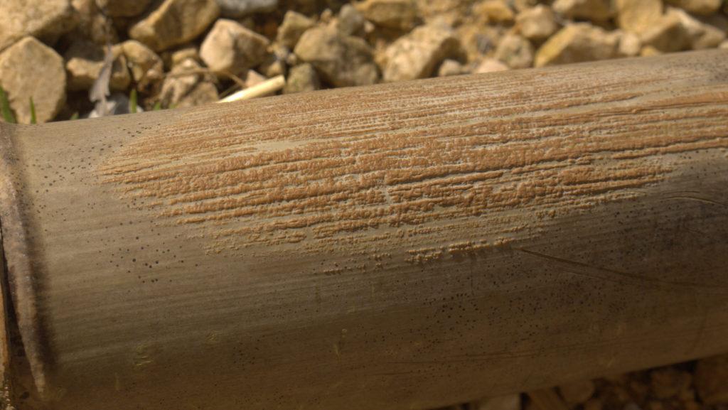 canuto de bambú