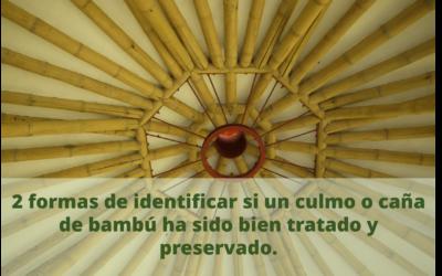 La caña de bambú