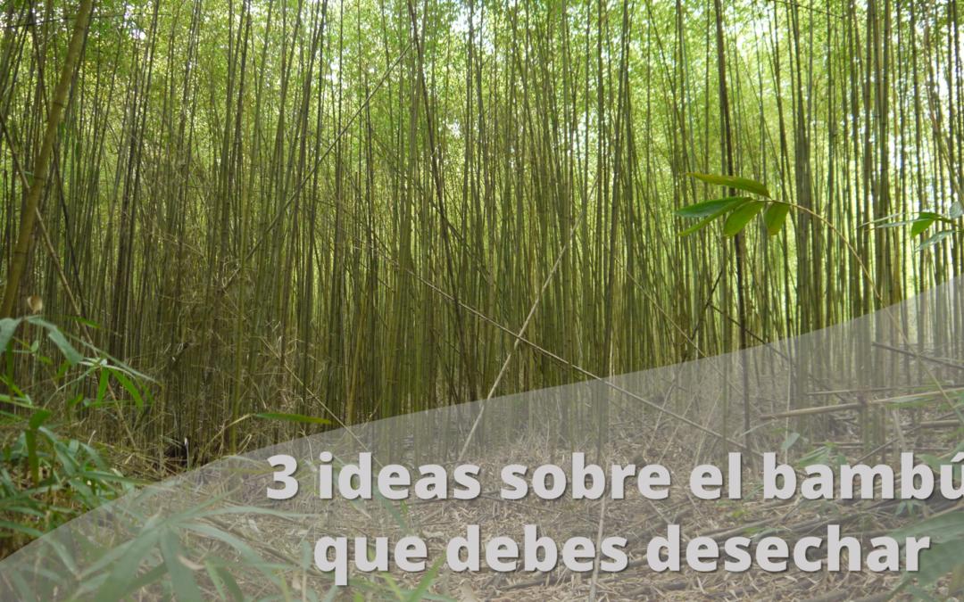 El bambú de verdad