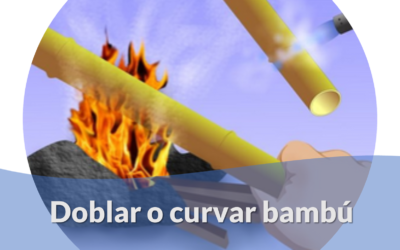 Doblar o curvar Bambú